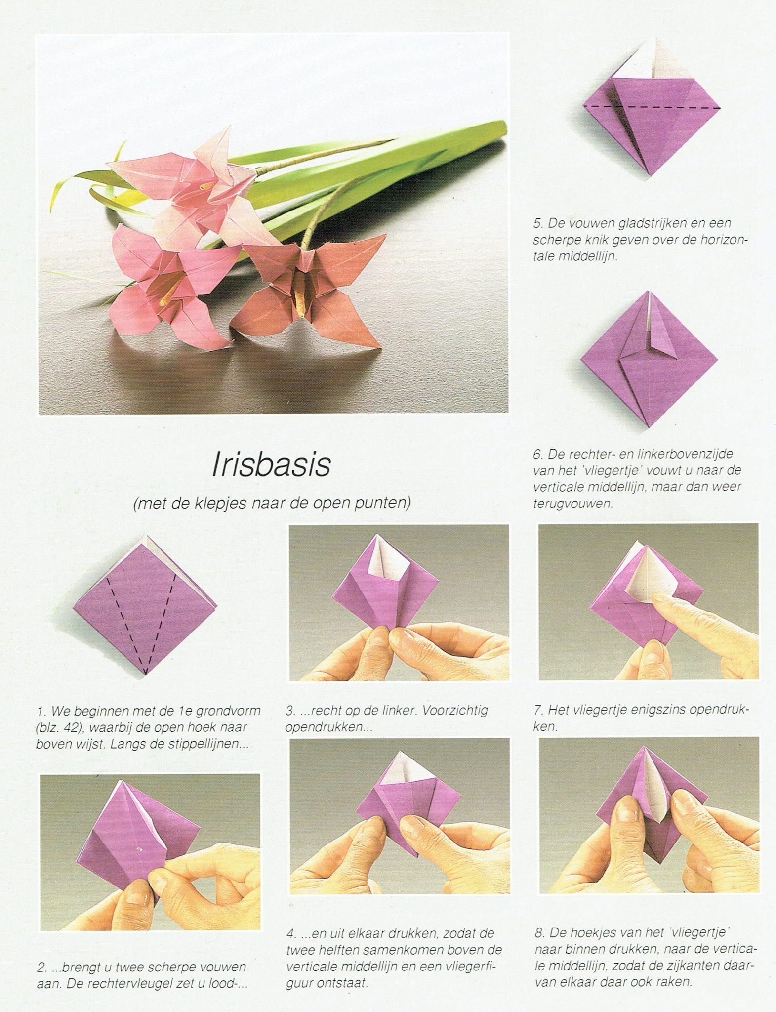 Irisbasis 1