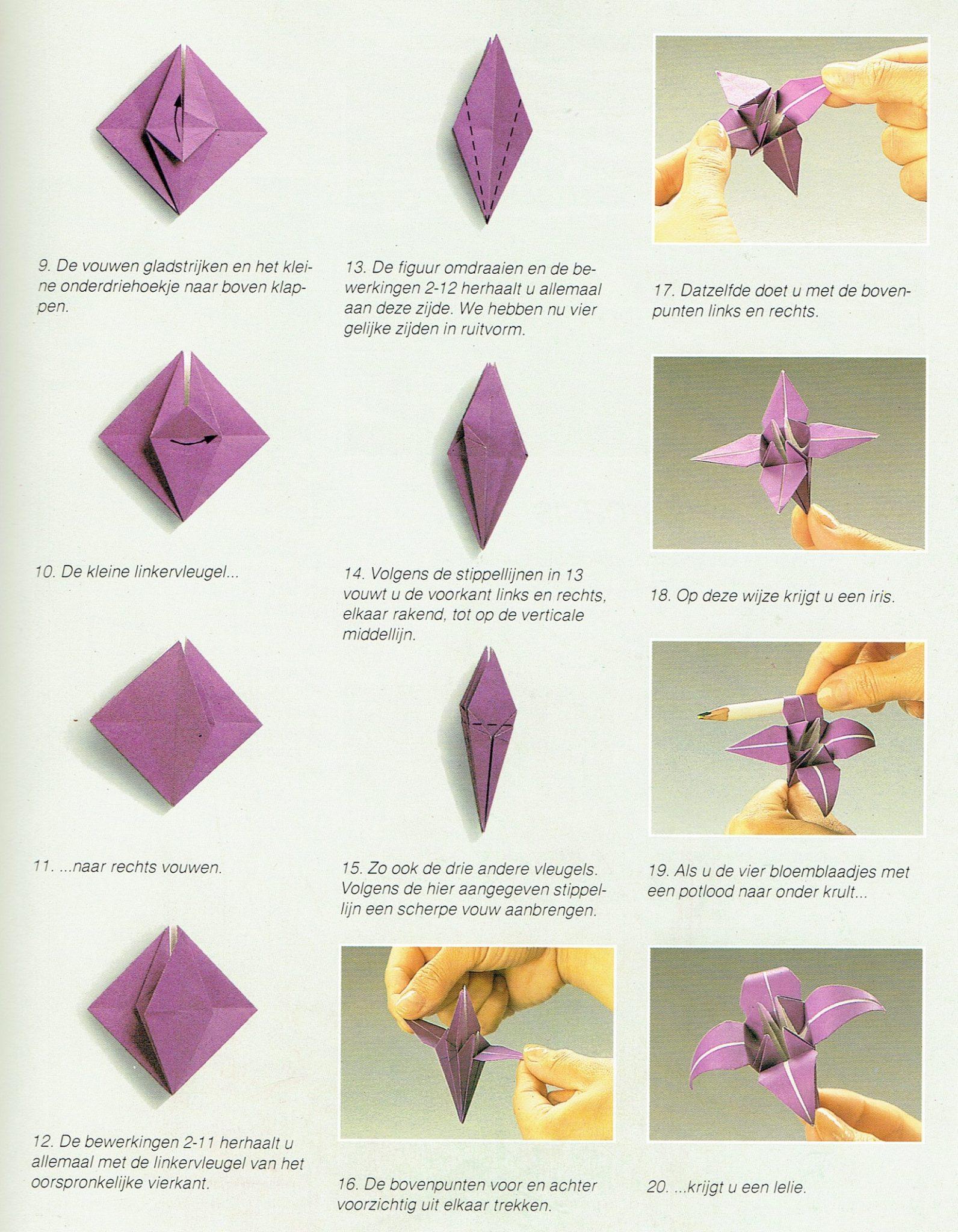 Irisbasis 2