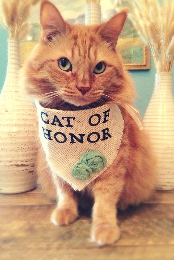 Cat of honor