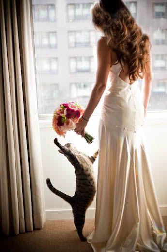 Gato fotos boda