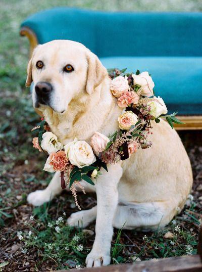 Perro de las flores
