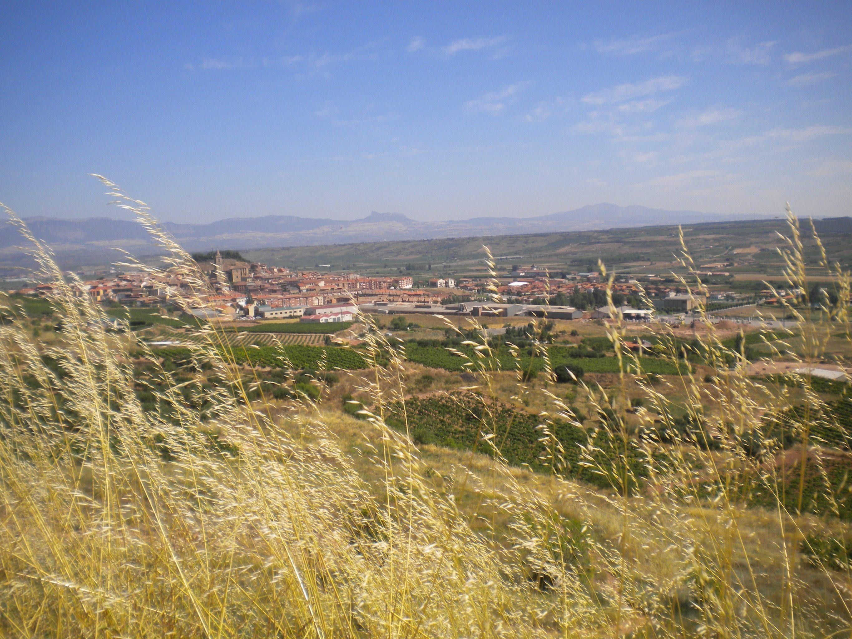 Viñedos La Rioja Bodas