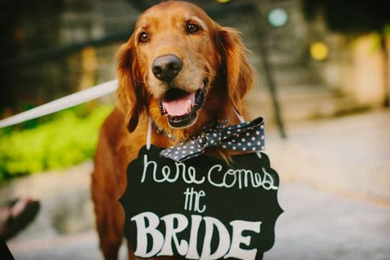 Aquí viene la novia