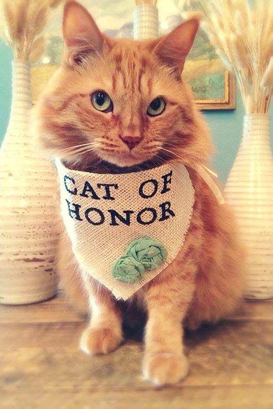 Cat of honor