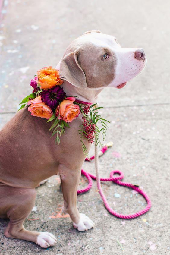 Collar flores perro