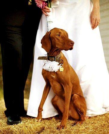 Fotos boda perro
