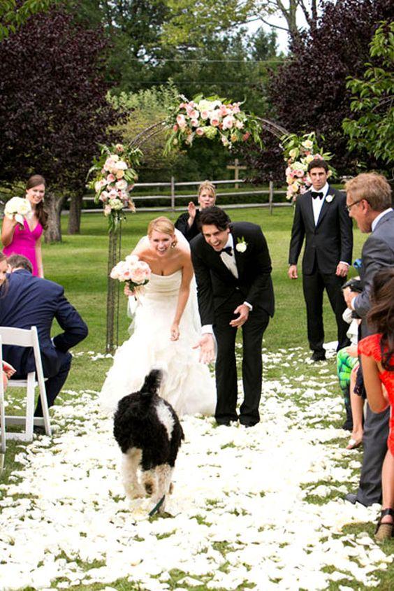 Mascotas bodas