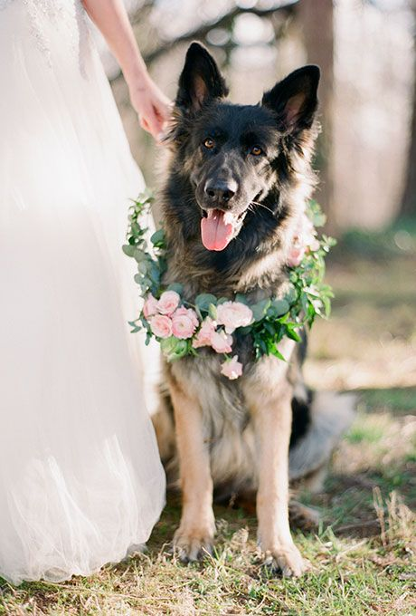 Pets in your wedding