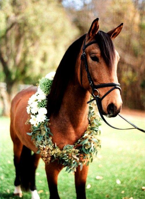 Tu caballo en tu boda